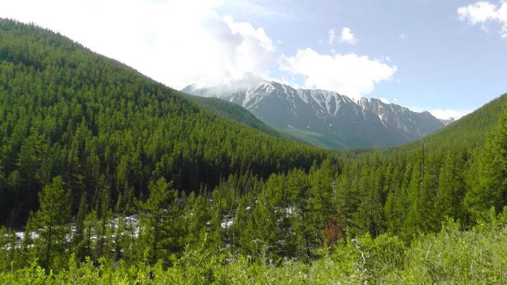 Горный Алтай - Лес и горы